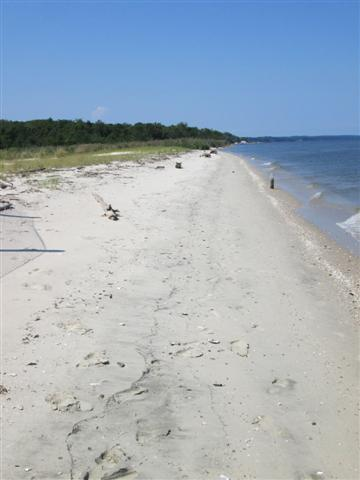 Chesapeake Bay beach at Flag Ponds Nature Park