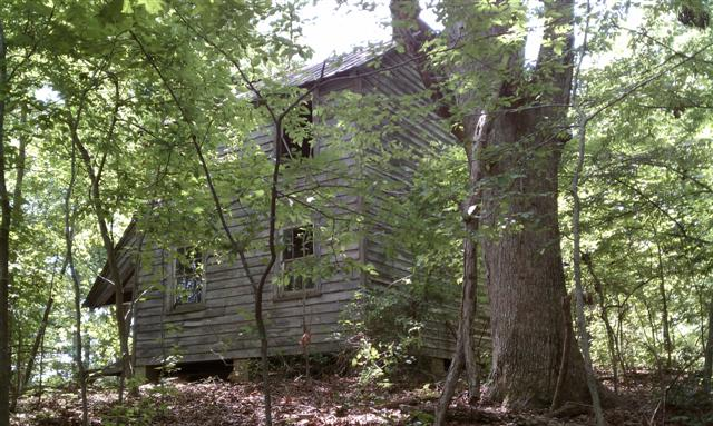 Wooden George Rice House in forest