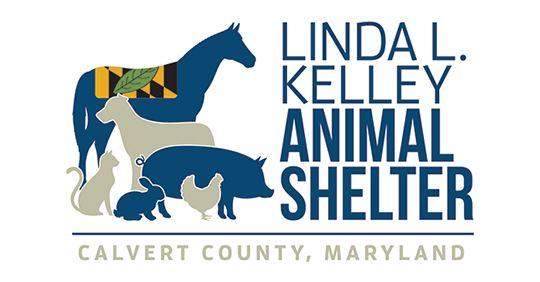 Logo_Animal-Shelter-White-News-Flash
