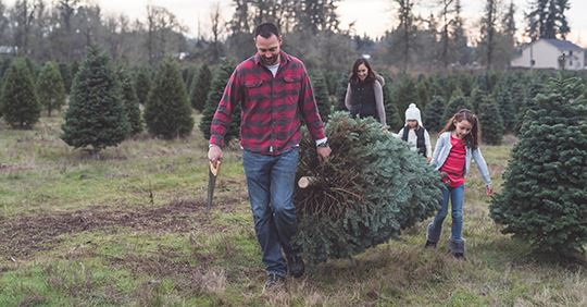 Live Christmas Tree Farm NEWSFLASH